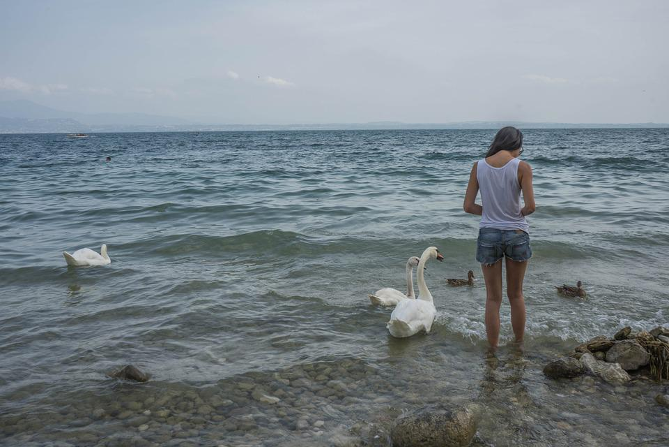 Person, Girl, Feeding, Swans, Birds, Duck, Nature
