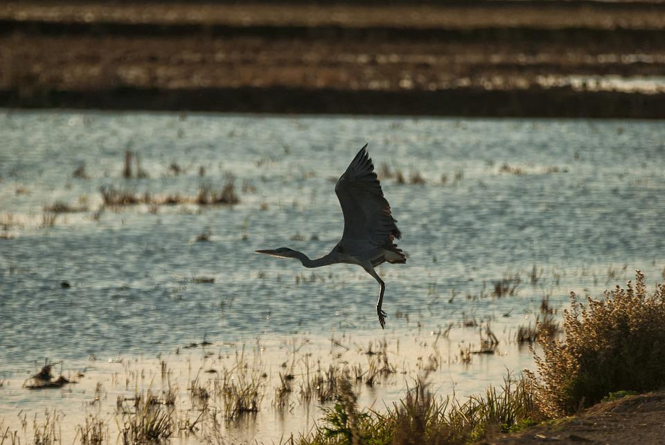 Birds, Body Of Water, Nature, Wild Life, Outdoors