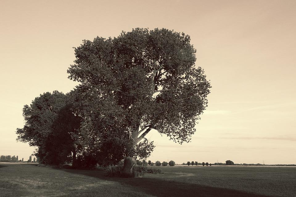 Landscape, Trees, Black And White Sepia, Nature