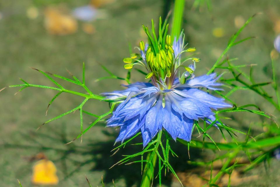 Black Grass, Hong Kong, Wild Flowers, Wild, Nature