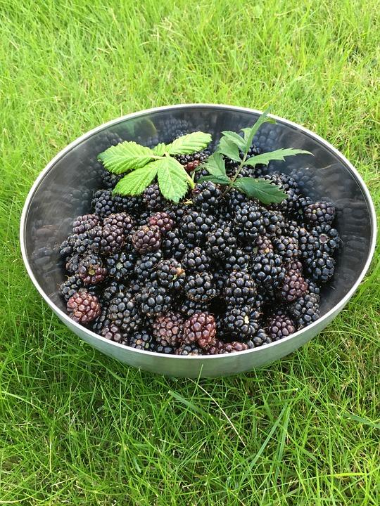 Blackberry, Höstskörd, Nature