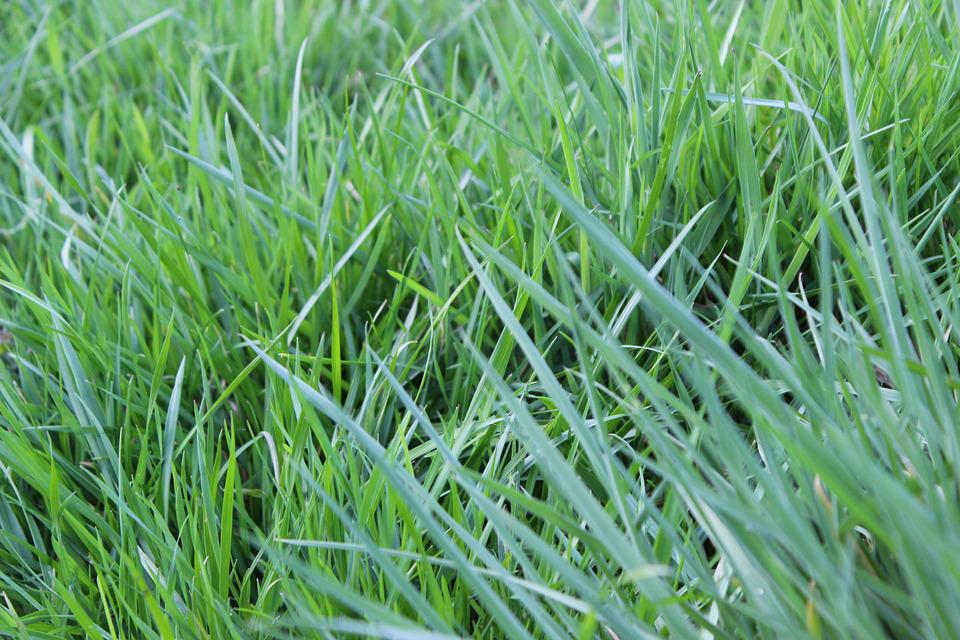 Blades Of Grass, Meadow, Pasture, Nature, Rush, Grass