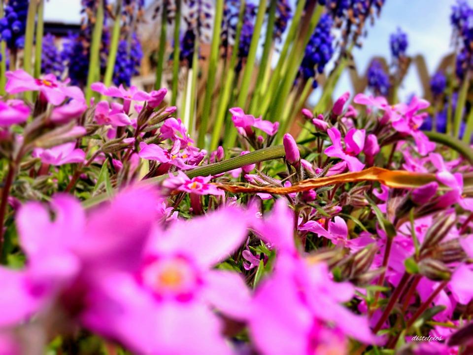 Garden, Flowers, Bloom, Blossom, Bloom, Spring, Nature