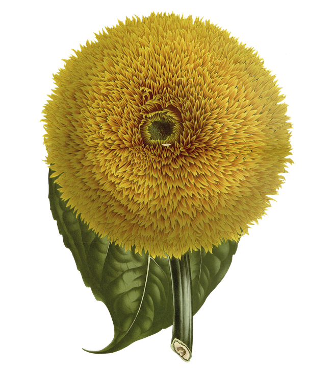 Flower, Yellow, Vintage, Nature, Bloom, Summer, Plant