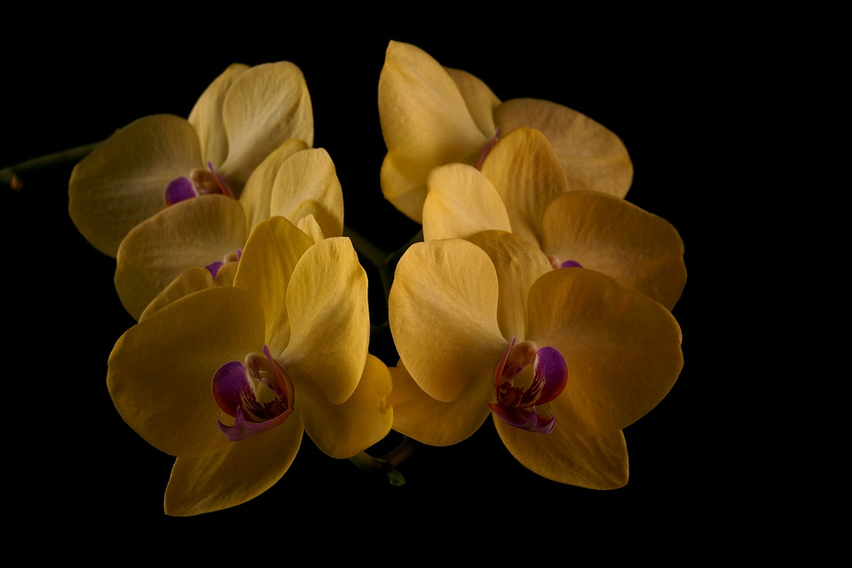 Flower, Plant, Nature, Color, Blooming, Garden, Petal