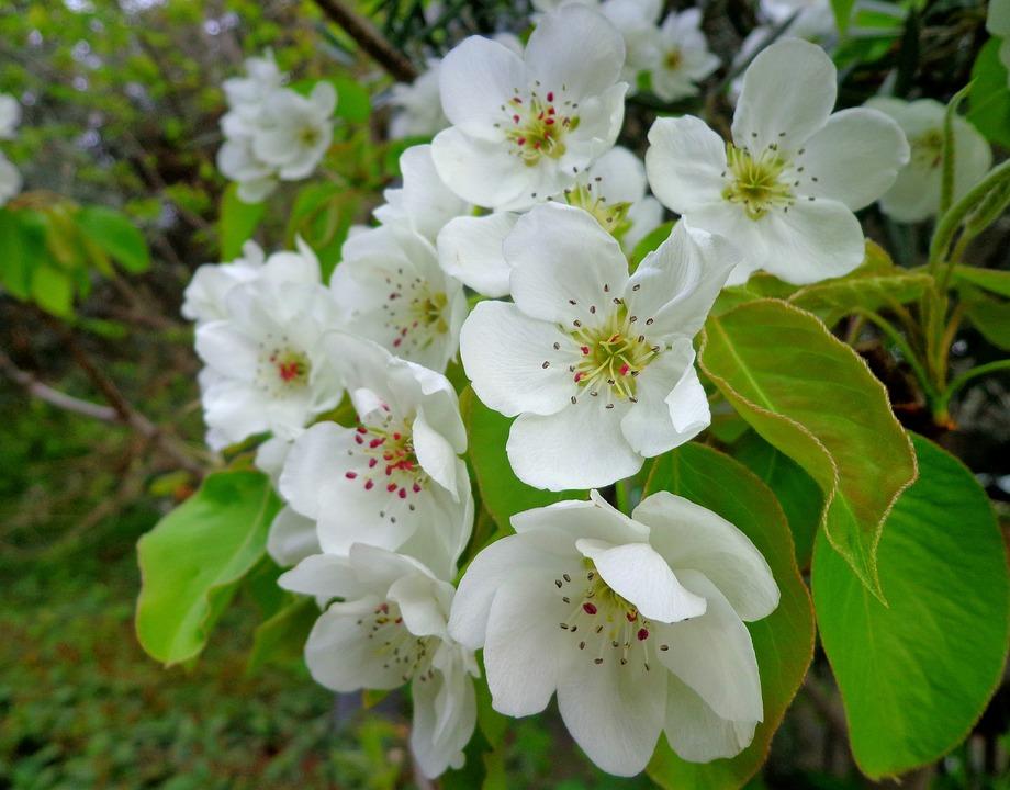 Flower, Plant, Nature, Sheet, Branch, Petal, Blooming