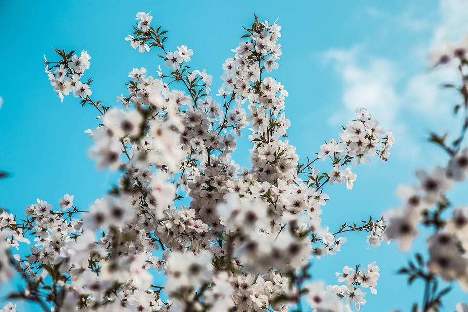Spring, Daylight Saving Time, Blue, Blossom, Nature