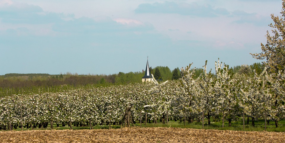 Blossom, Field, Nature, Village