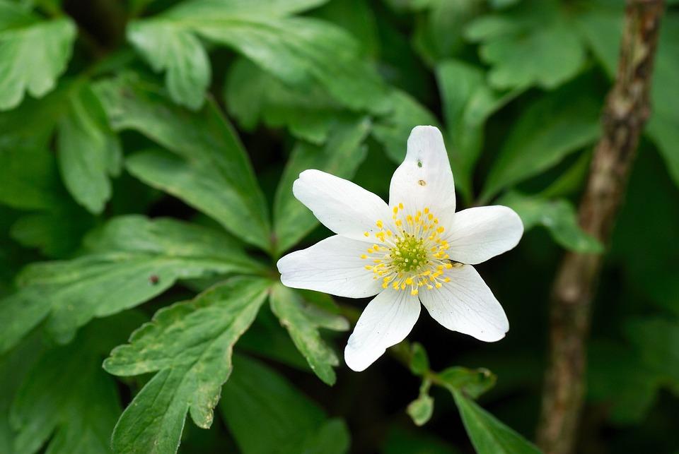Macro, Flower, Nature, Garden, Blossom, Bloom, Close