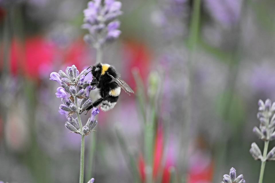 Fictional, Hummel, Insect, Nature, Animal, Blossom
