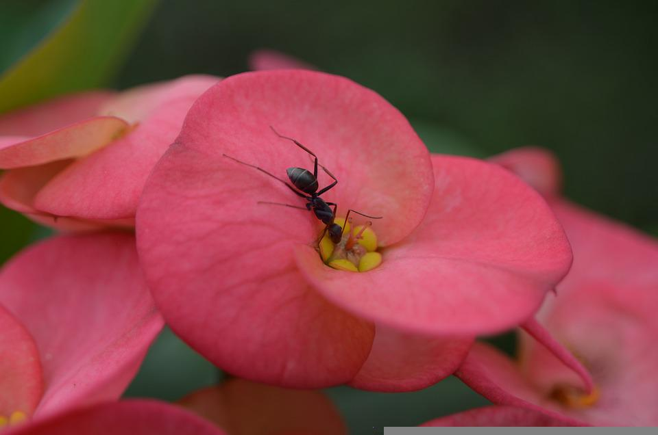 Flower, Ant, Nature, Plant, Blossom, Insect, Ants