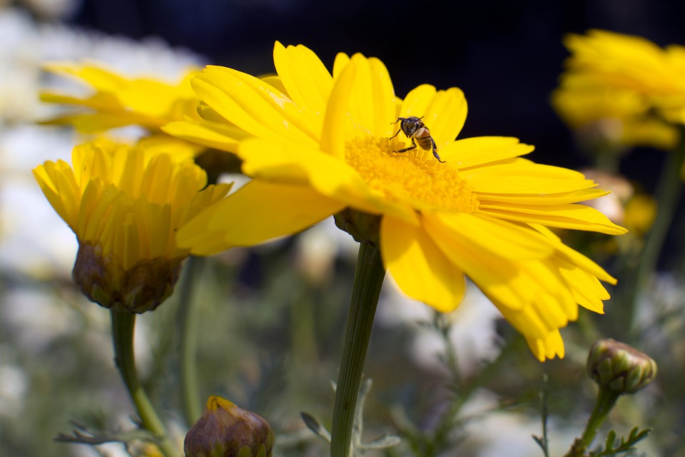 Flowers, Nature, Beauty, Blossom, Spring, Garden, Bloom