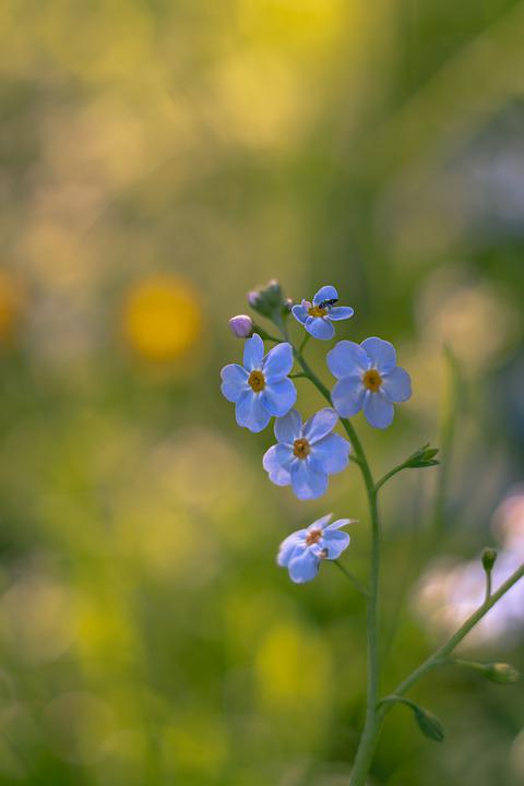 Flower, Pet, Meadow, Macro, Nature, Blue, Plant, Summer