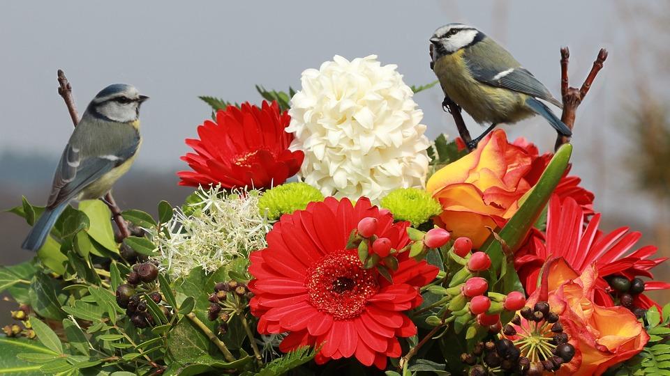 Nature, Flowers, Bird, Blue Tit, Flower Arrangement