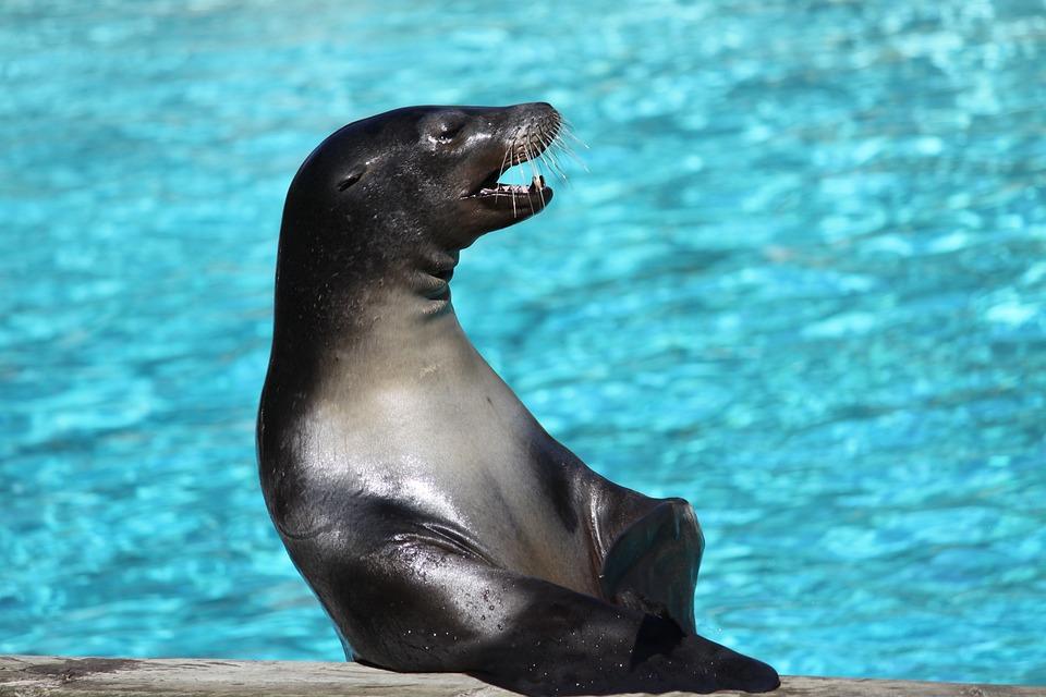 Animal, Body Of Water, Swim, Sea, Nature