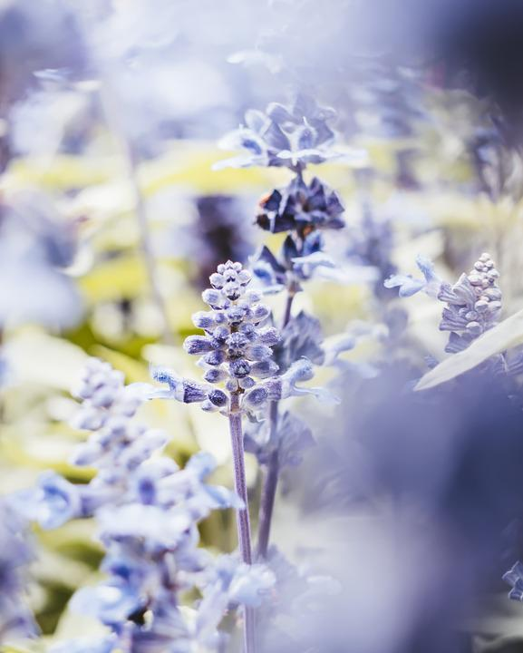 Flowers, Nature, Flower Bed, Bokeh, Out Of Focus