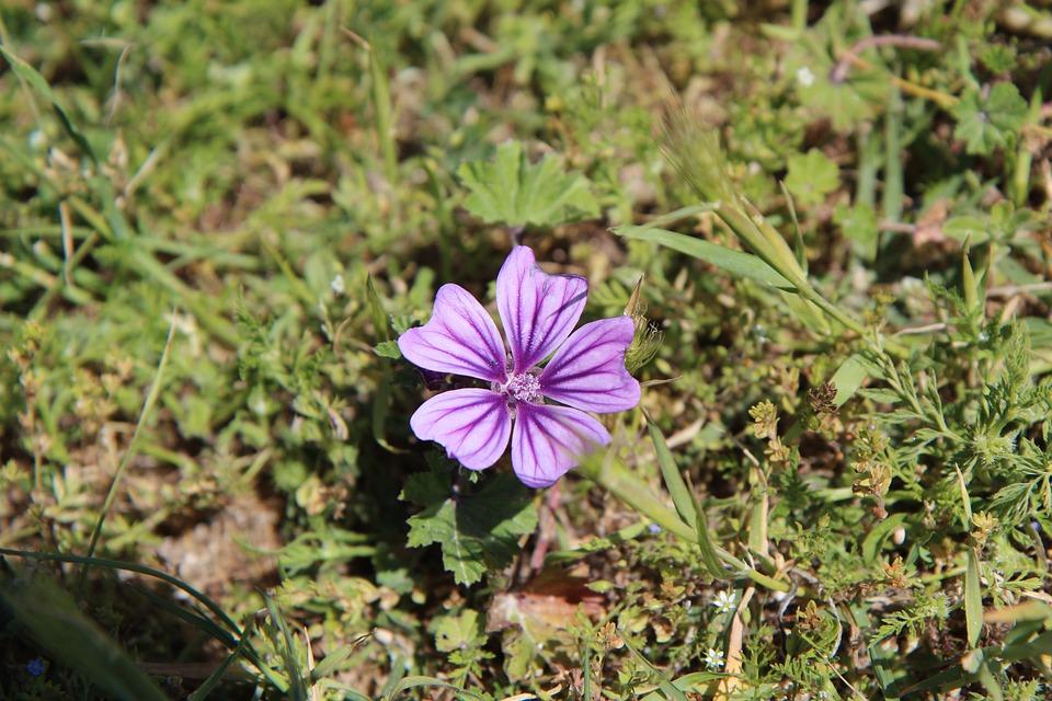 Wild Plant, Nature, Flower, Botany
