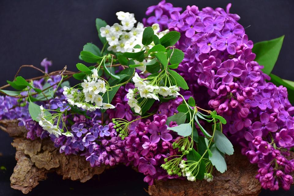 Lilac, Flower, Plant, Nature, Floral, Leaf, Bouquet