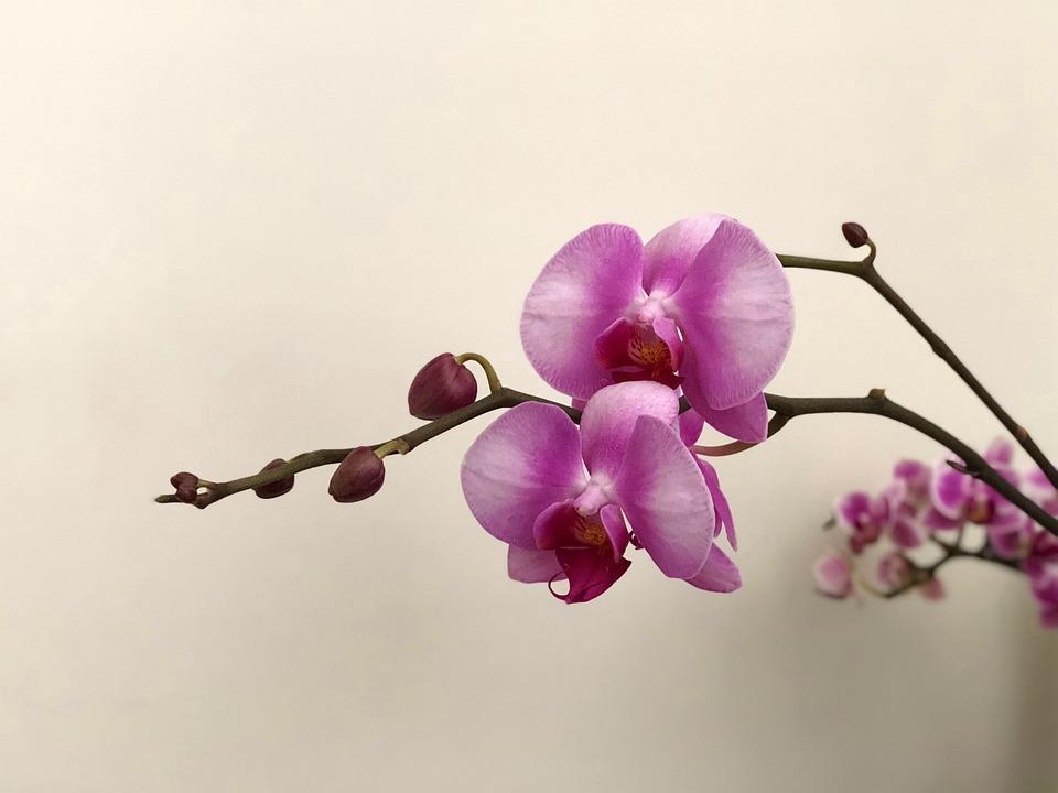 Blue Flowers, Nature, Plant, Branch