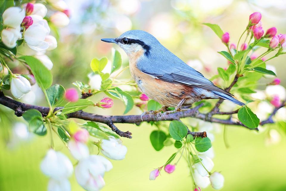 Spring Bird, Bird, Spring, Blue, Nature, Branch