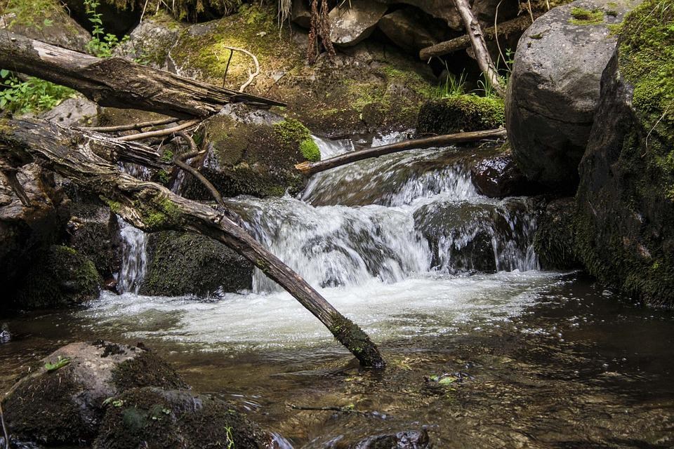 Bach, Forest, Branch, Nature, Stones, Landscape