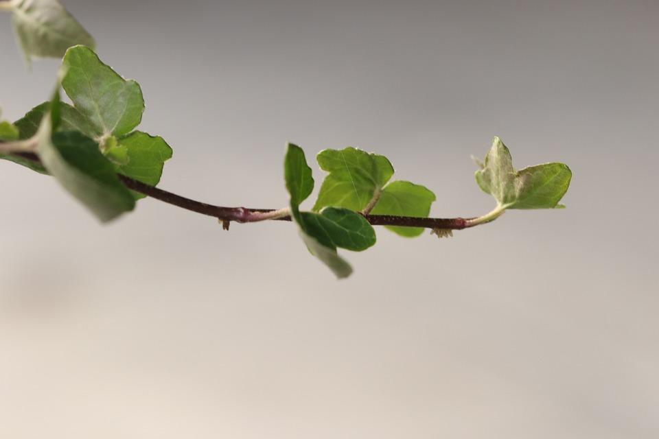 Branch, Green, Nature, Leaf