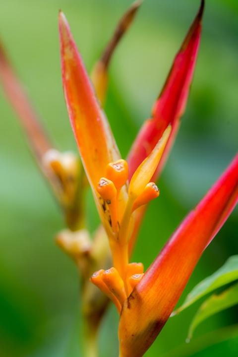 Flower, Nature, Brazil