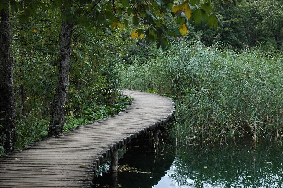 Bridge, Green, Nature, Travel, Forest, Park, Lake