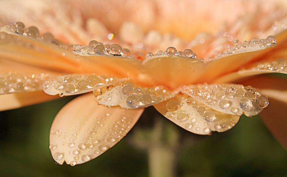 Nature, Closeup, Desktop, Beautiful, Bright, Flora