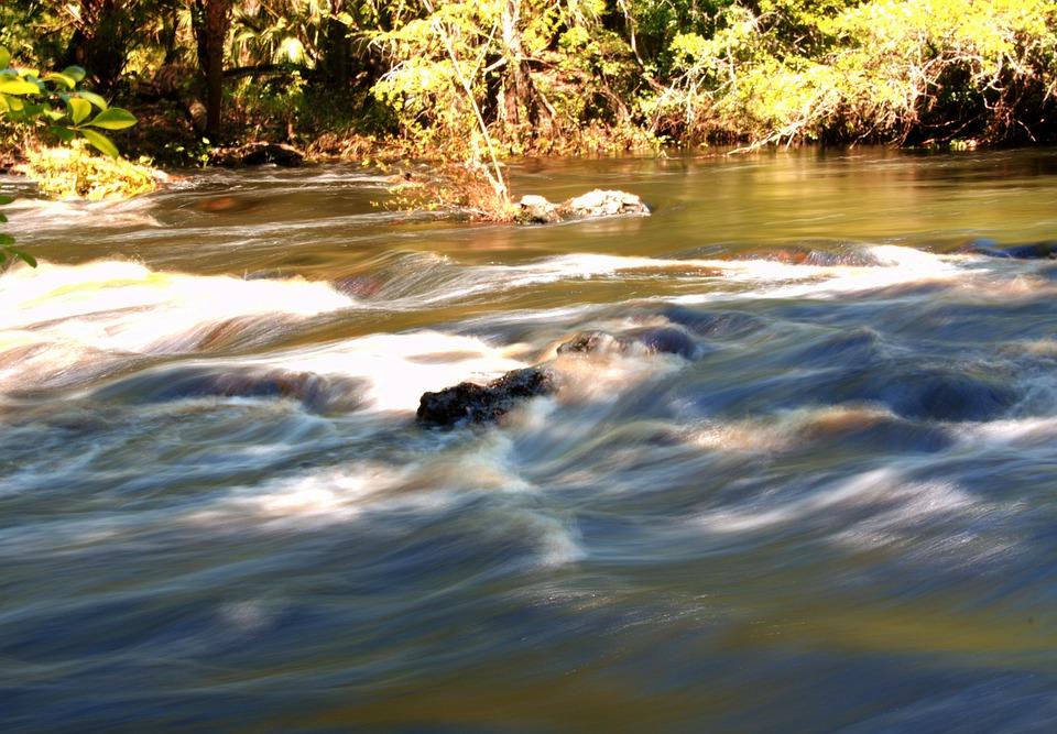 Florida, Stream, Creek, River, Flow, Nature, Brook