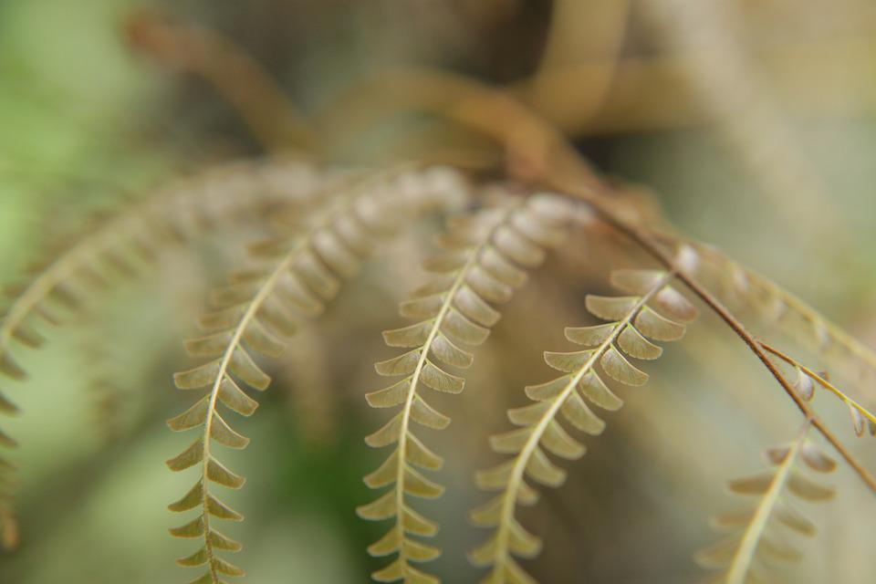 Nature, Leaves, Tiny, Green, Brown, Plant, Fern, Macro