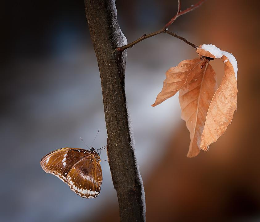 Branch, Leaves, Brown, True Leaves, Butterfly, Nature