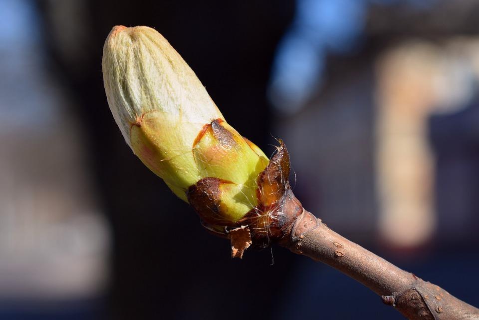 Nature, Tree, Spring, Bud, Branch, Macro, Details