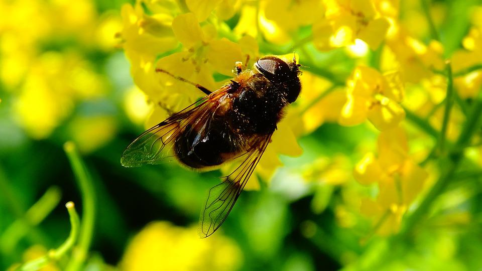 Bee, Flowers, Honey, Nature, Flower, Bees, Bug, Insects