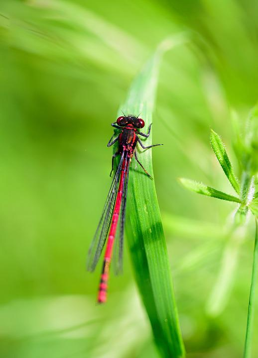 Insect, Dragonfly, Macro, Fly, Nature, Bug, Green