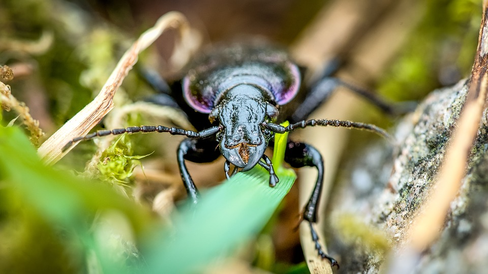 The Little Old Beetle, Bug, Nature, Insect, Animal