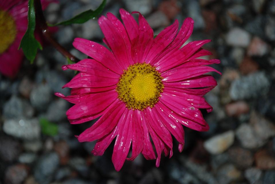 Flower, Plant, Nature, Burgundy, Leaf, Pistils, Forest