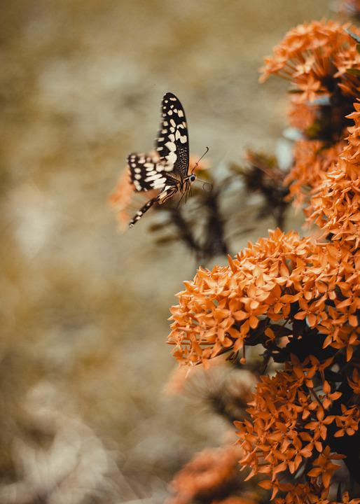 Africa, Ghana, Butterfly, Wildlife, Nature