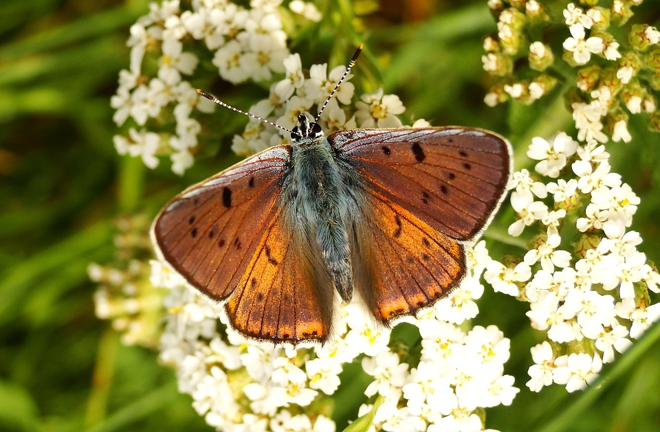 Butterfly Day, Insect, Nature, Flower, Garden, Animals