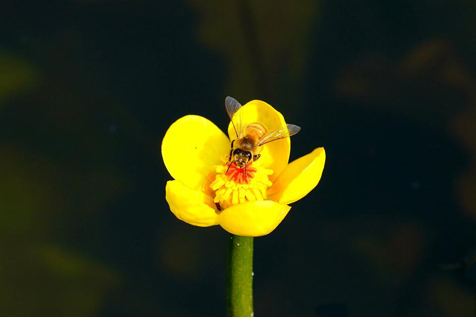 Lotus, Pond, Bee, Butterfly, Flower, Insect, Nature