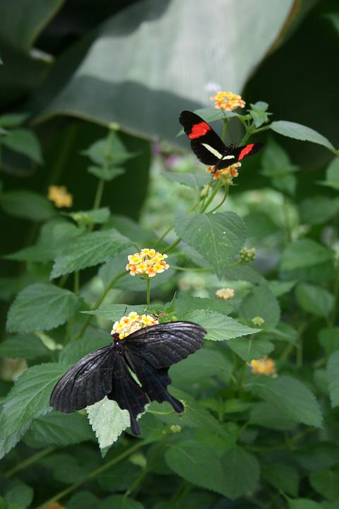 Butterfly, Flower, Nature, Butterfly Park