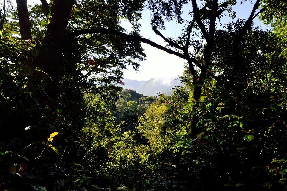 Bwindi Impenetrable Forest, Uganda, Africa, Nature
