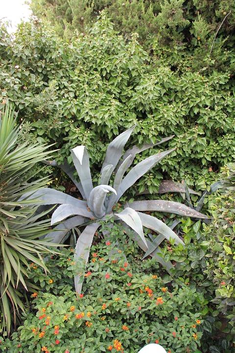 Flower, Nature, Juicy, Outdoor, Garden, Aloe, Cactus