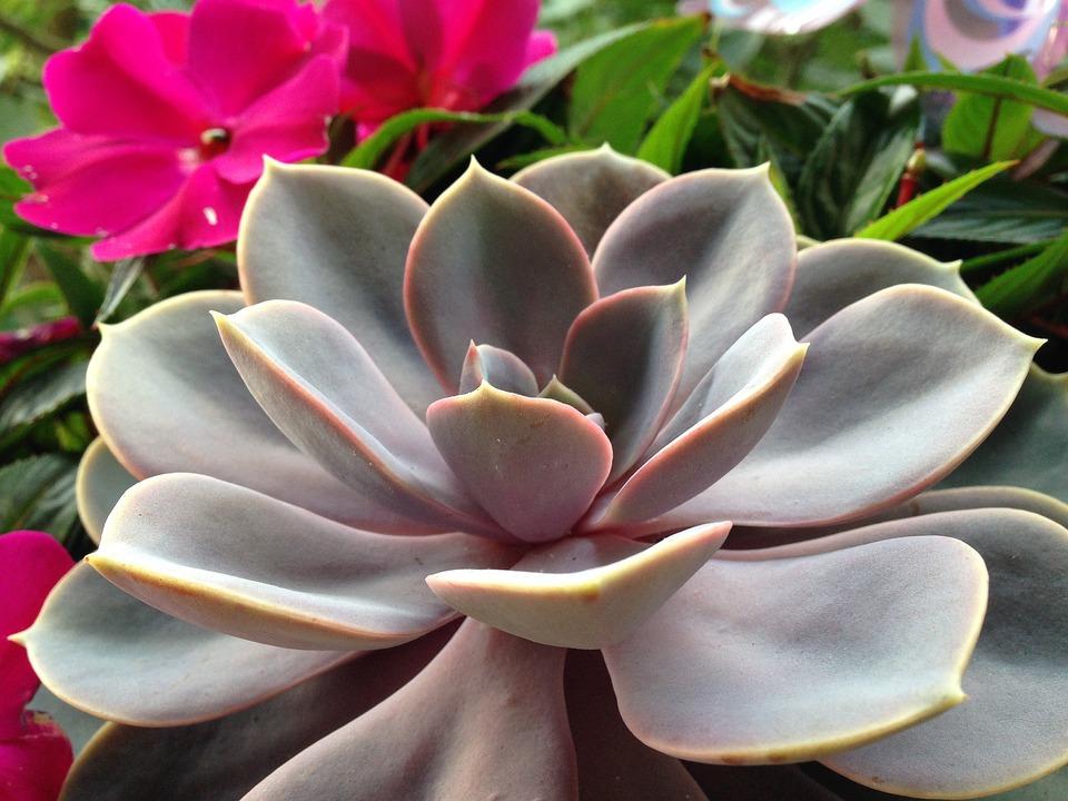 Cactus, Nature, Plant, Cactus Greenhouse, Leaves
