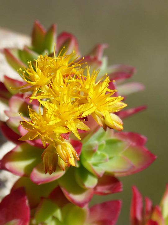 Cactus, Gross Floor, Nature, Flower, Plant, Leaf