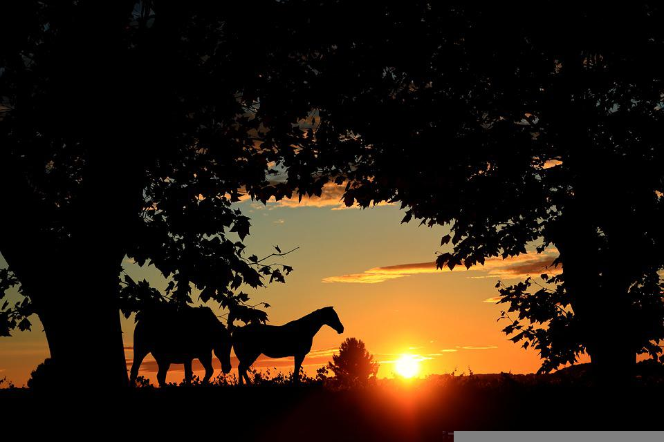 Sunset, Trees, Horses, Nature, Sky, Sun, Light, Calm
