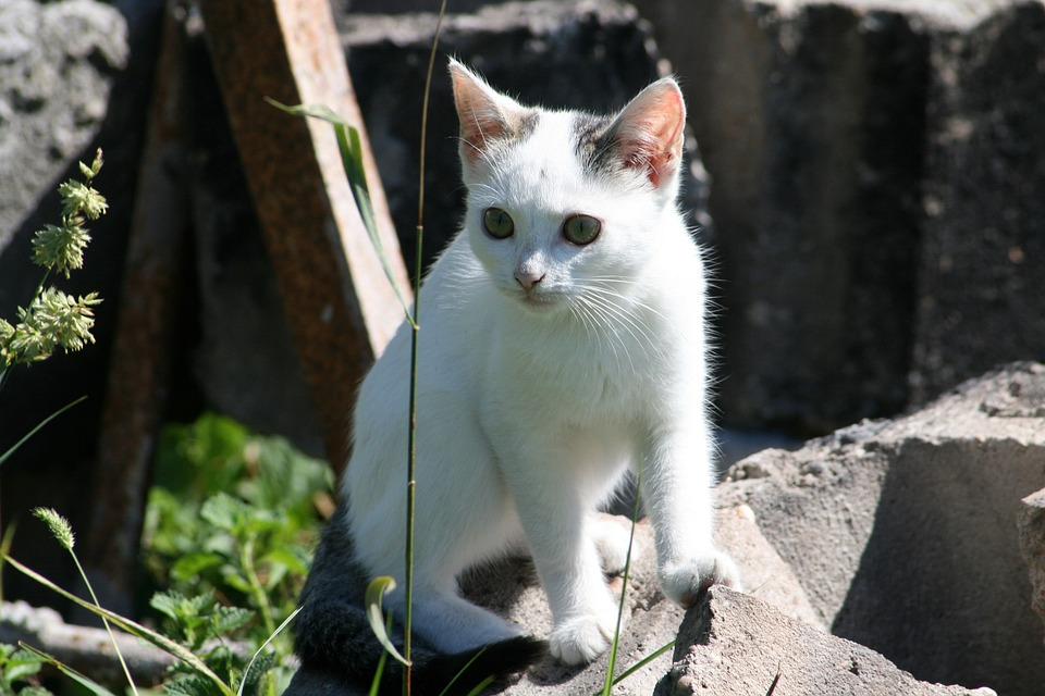 Stray Animal, Cat, Nature, Kitten