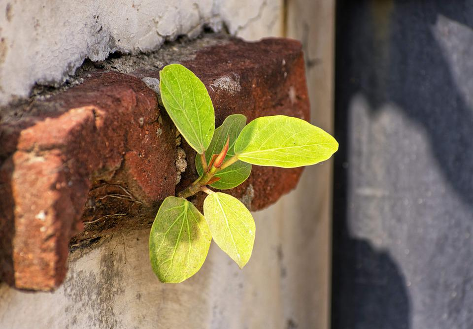 Leaves, Wall, Brick, Concrete, Cement, Grow, Nature