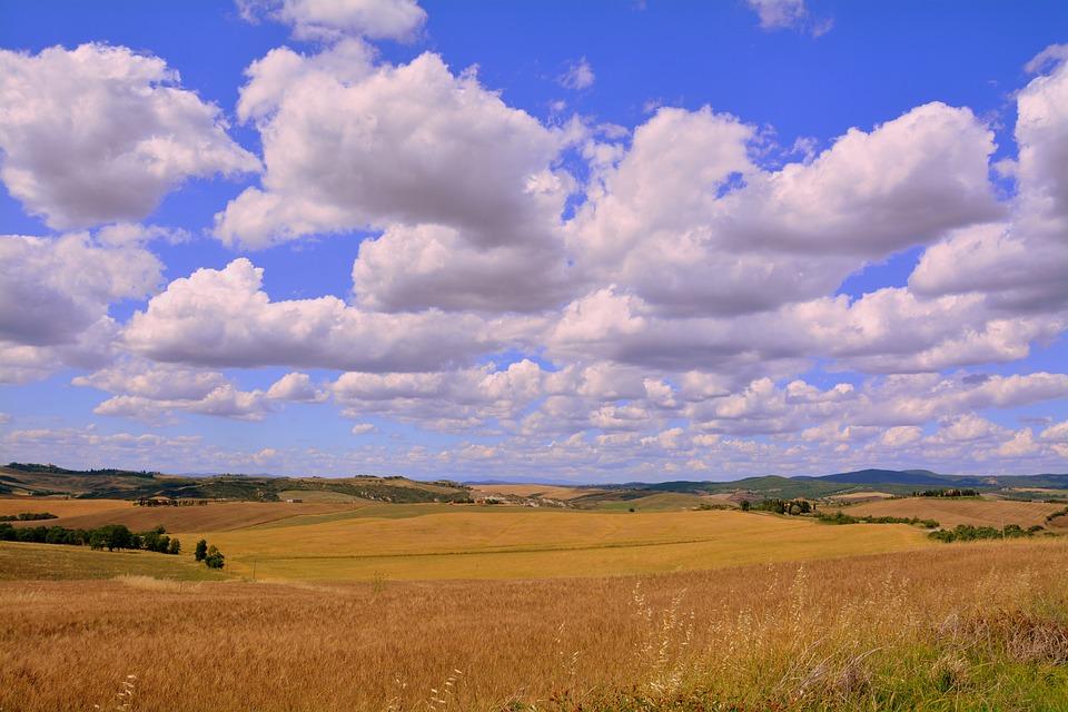 Wheat, Field, Sky, Cereals, Nature, Summer, Landscape