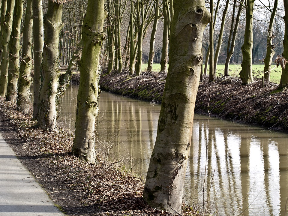 Water, Canal, Trees, Channel, Nature, Autumn, Waterways